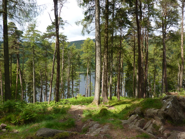 A glimpse of Loch Trool through the trees