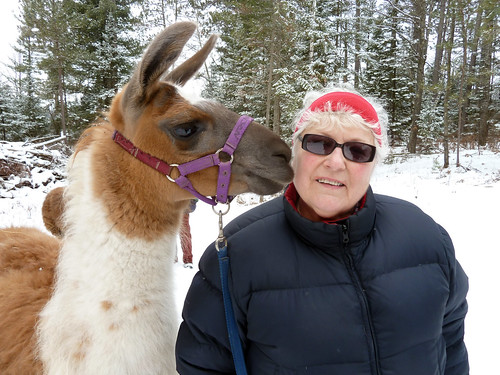 Sue and Her Amiable Llama