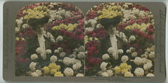 Surrounded by the flower gems of Autumn, Horticultural Hall, Fairmount Park, Philadelphia, Pa., U.S.A. c1908.