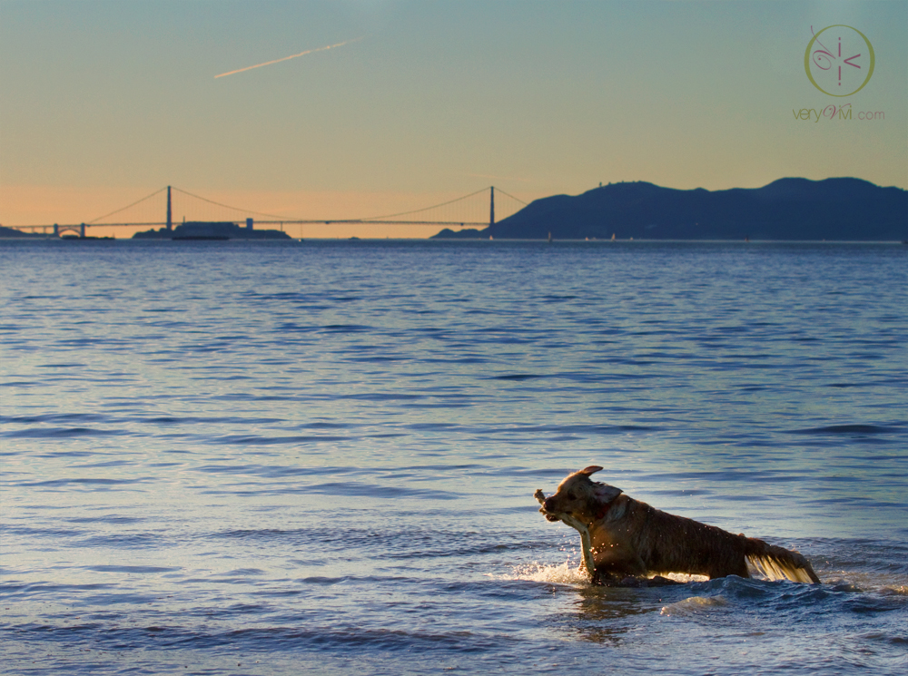 Sunset Dip In The San Francisco Bay