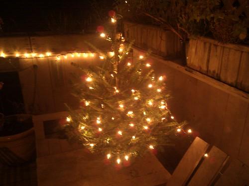 01-10-12 Deck Tree