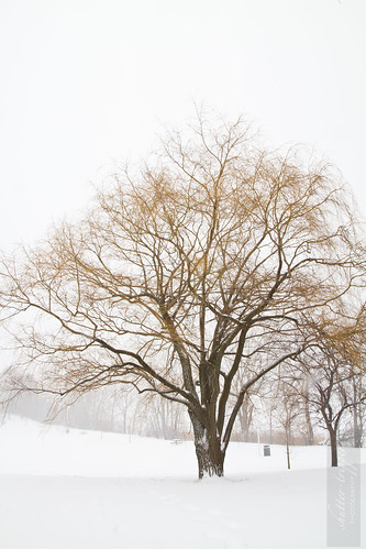 Snowstorm-13012012-2