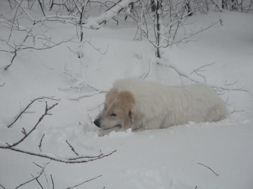 nana ha trovato un osso sotto la neve