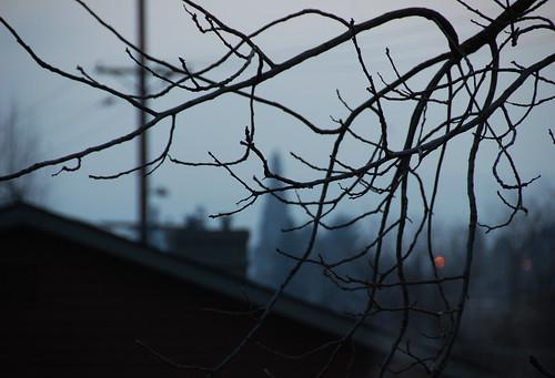 25. Grey Days