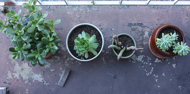 my succulents needed a break