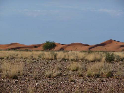 Kalahari dunes (2)