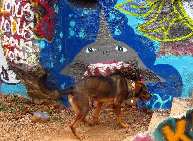 Shark Eating Dog