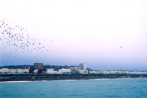Brighton Birds by xzoeagx