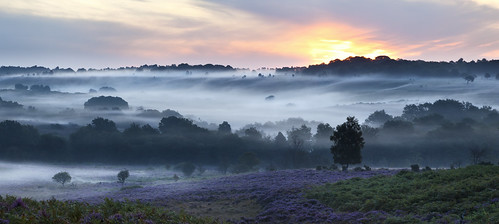 new trees mist forest sunrise canon view hill hampshire 5d lyndhurst mkii 70300 mogshade bratley