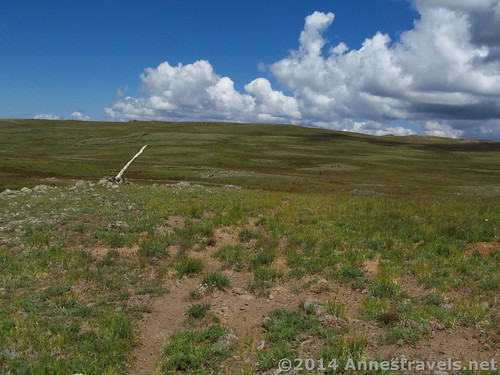Sometimes a trail appeared while we were walking away from the main trail, such as by this cairn - but usually there was just open, grassy land. On Trail #1803 toward the Lost Lakes Peaks, Flat Tops Wilderness Area, Colorado