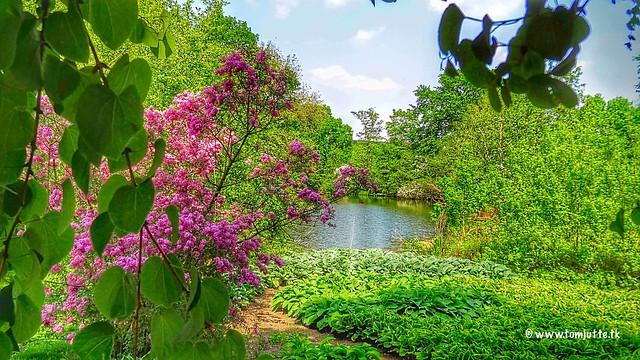 Botanic Gardens, Utrecht, Netherlands - 4283