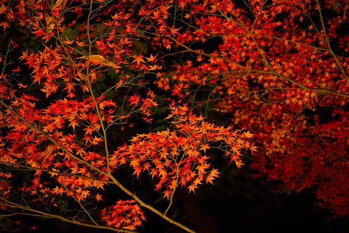 Nagatoro Autumn colored leaves light-up
