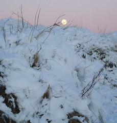 Moon on the Dune
