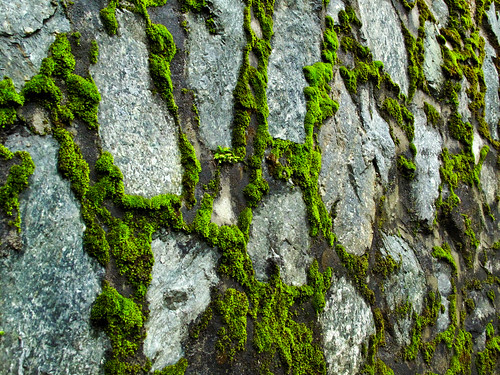 IMG_0837 wall and moss - Genting Highlands