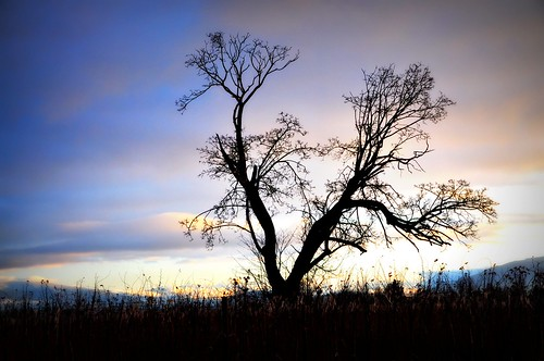 12-23-11 First Light by roswellsgirl