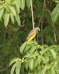 Guyana-8349