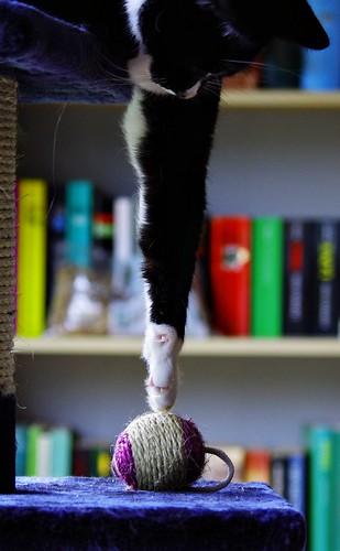 [フリー画像素材] 動物 1, 猫・ネコ ID:201112061000