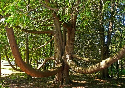 county old tree ancient michigan panasonic cedar lighhouse leelanau northport whitecedar grandtraverse leelanaustatepark fz18 jimflix