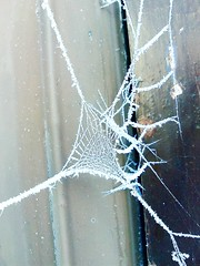 Spider Web Shed