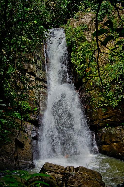 Puerto Rico (El Yunque)