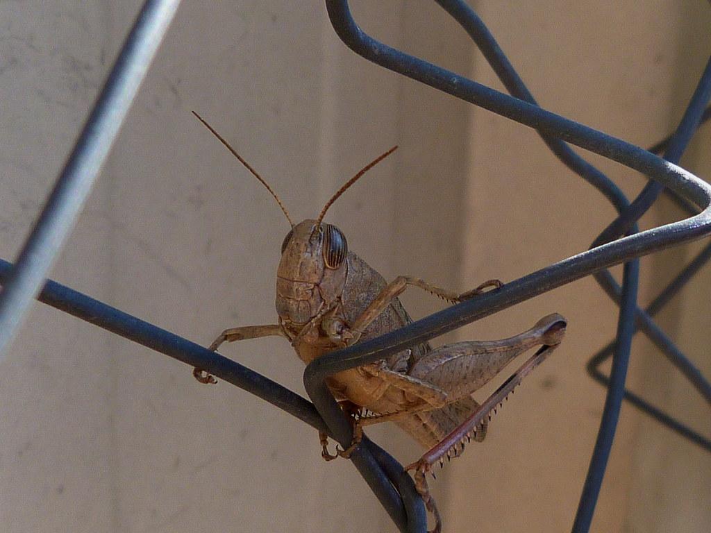 23-11-2011-grasshopper2