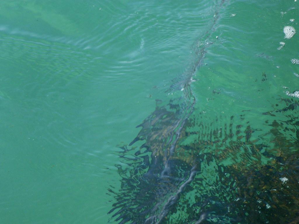 02-12-2011-transparent-sea