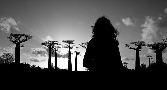 Les racines du ciel, par Franck Vervial