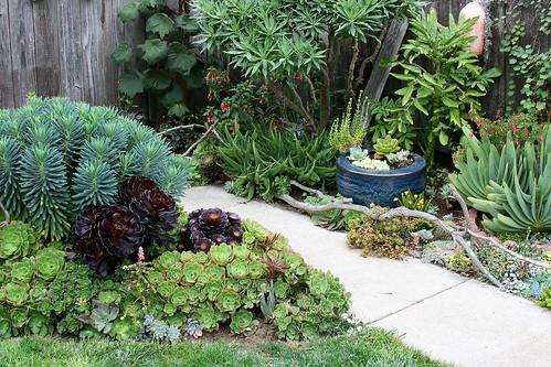succulent beds