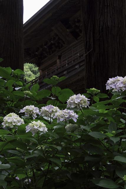 110615_123819_北鎌倉_円覚寺