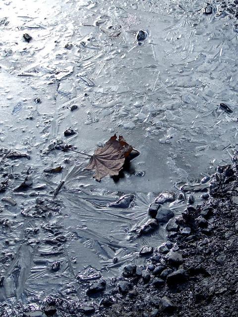 frozen puddle