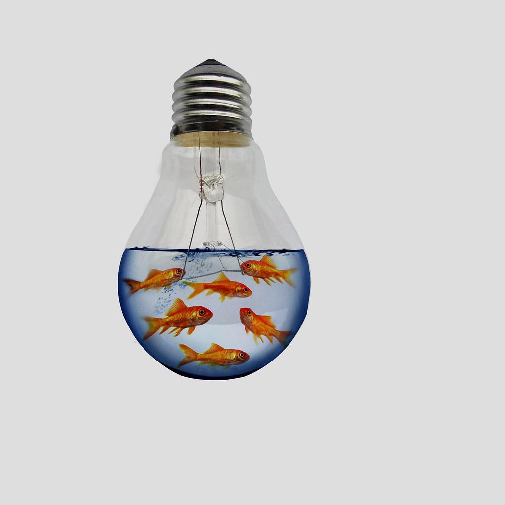 Fish aquarium light bulbs - Light Bulb Fish Tank