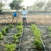 Drip irrigation - Chad, Kanem region in the Sahel band