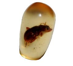 hand(0.0), finger(0.0), jewellery(0.0), gemstone(0.0), egg(0.0), amber(1.0), invertebrate(1.0),