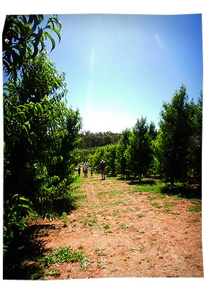 Fruit Orchard 2011