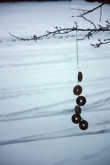 hanging bird donuts