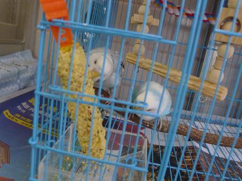 小P 與 Nico 吃鳥棒棒糖