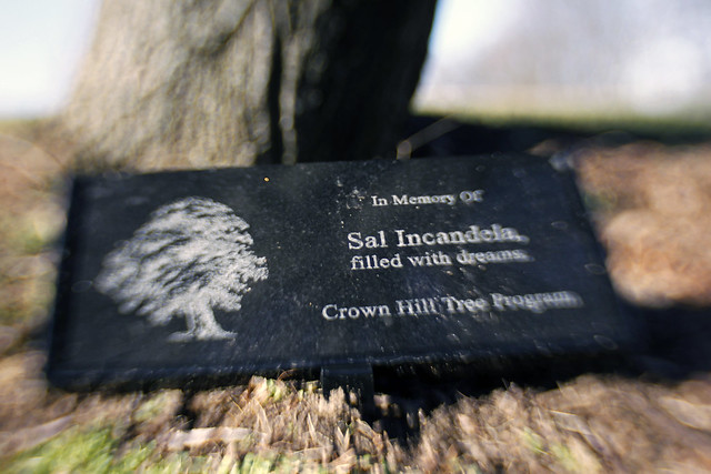 In Memory of Sal Incandela