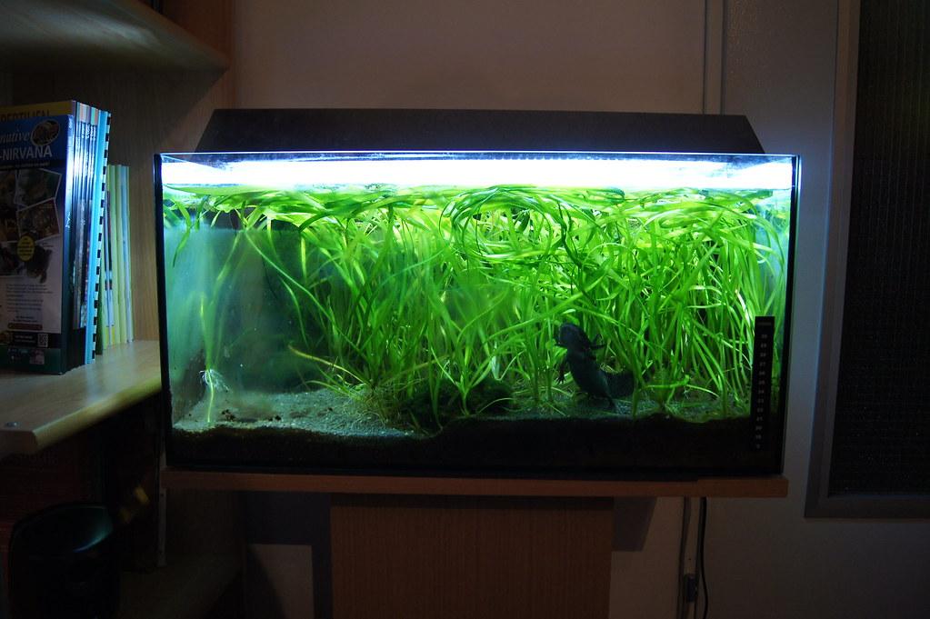 led oder leuchtstoffröhre aquarium