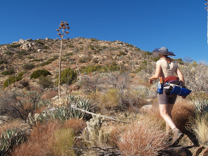 Yucca- and cholla-whacking the ridge.