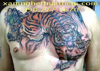 Hoa Rong Van 4d Hinh Xam Tattoo Ca Chep Ho Cop Ky