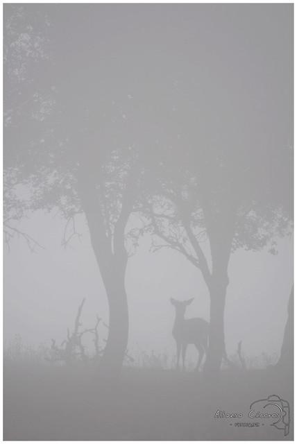 Silueta en la niebla 6647465253_71221b5bf6_z
