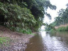陰涼及庇護溪流的天然綠帶全面剷除(左岸)
