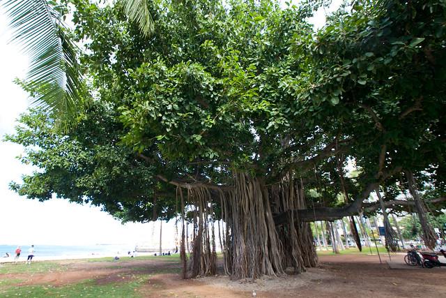 Avatar tree   Flickr - Photo Sharing!