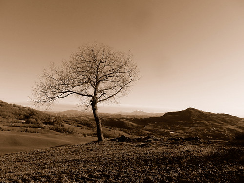 friends panorama tree nature sepia landscape 1001nights albero rebranca allegrisinasceosidiventa