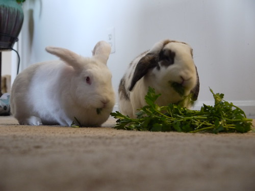 gus and betsy eating their mid-morning snack