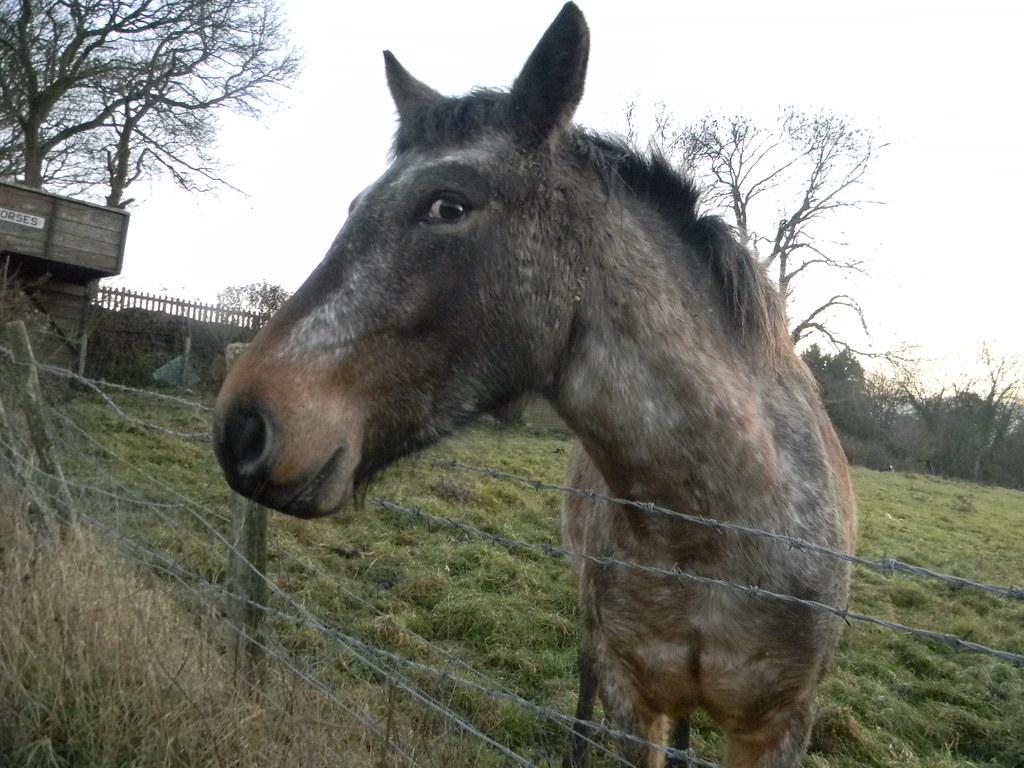 Horse Pluckley Circular