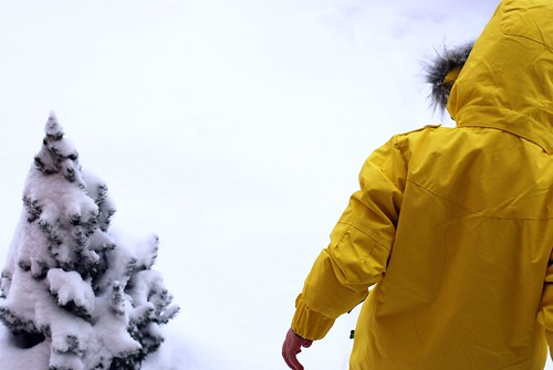 yellowcoat 009
