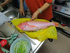 fish, fish, seafood, red snapper, food,