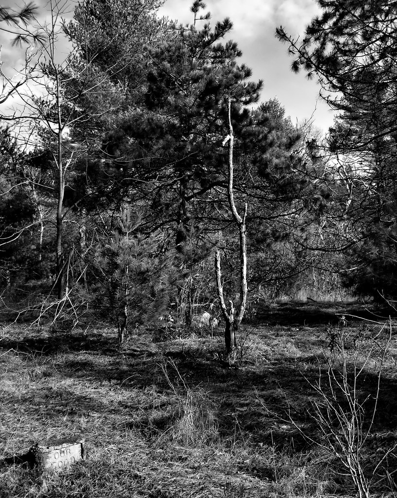 Pet Cemetery in the Freetown Fall River State Forest