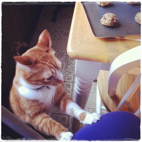 Soft n Chewy Oatmeal Raisin Cookies